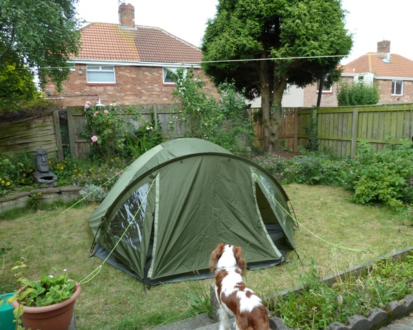 Tent in garden with dog in front