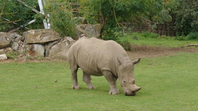 Rhino at Flamingo land