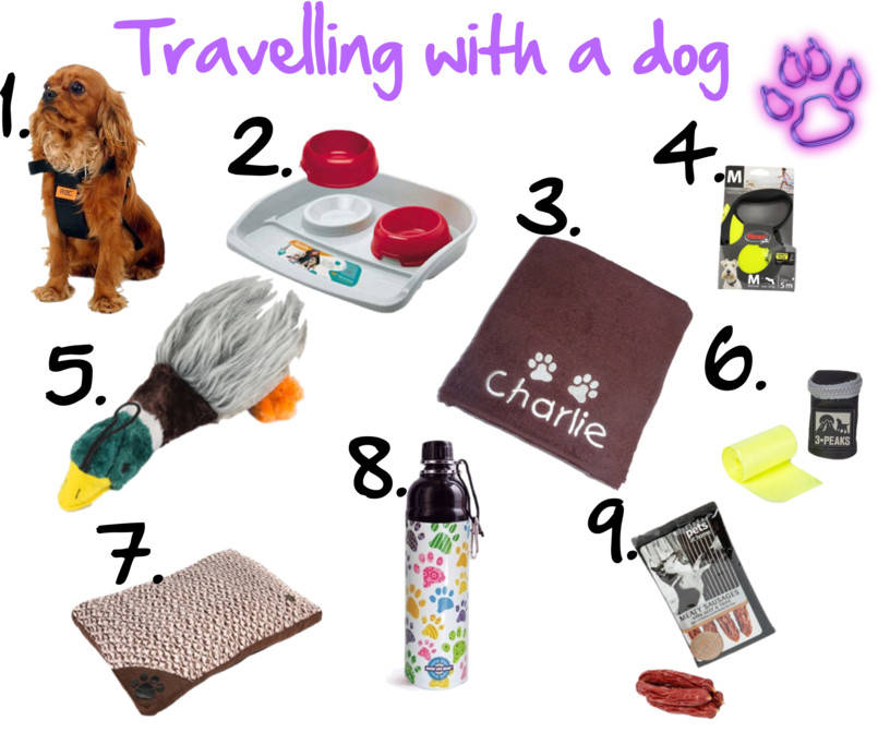 What to pack for your dog when you go on holiday