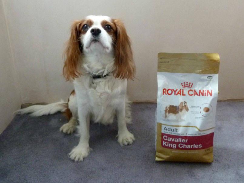 Royal Canin Food