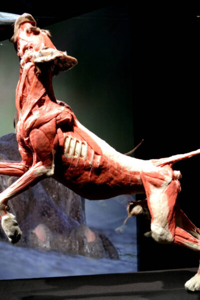 A dog at body worlds animals inside out exhibition