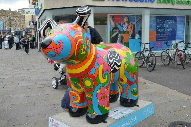 Pyschadelic snowdog on the Great North snowdog trail