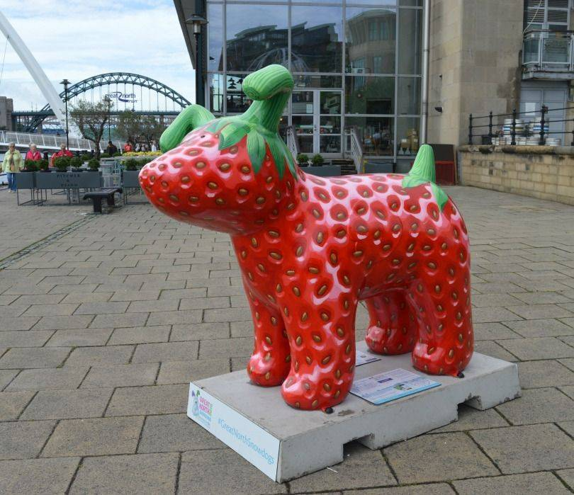 Snowberry Great North Snowdog