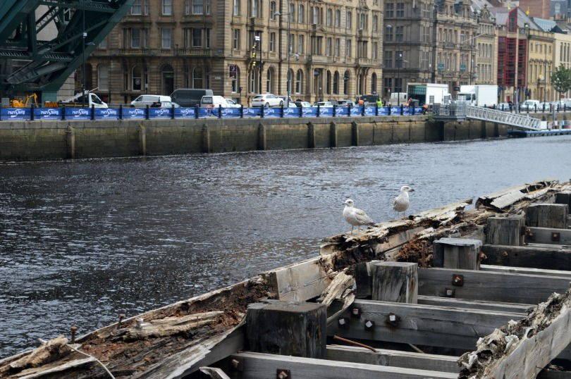 Seagulls enjoying a rest on the Swing Bridge Newcastle