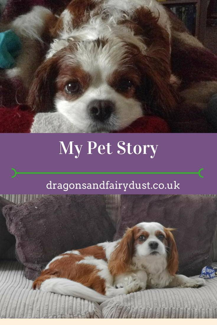 My pet story. How I got my dog and how hes changed my life