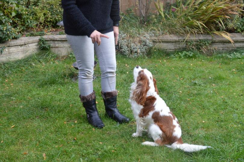Autumn walk with hotter boots and my dog looking on