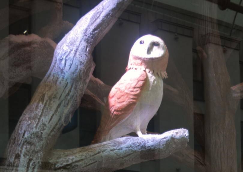 An owl in Fenwicks christmas windows