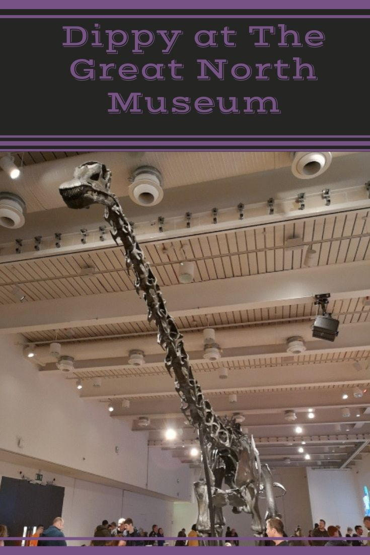 Dippy the Diplodocus has arrived at the Great North Museum until October 2019