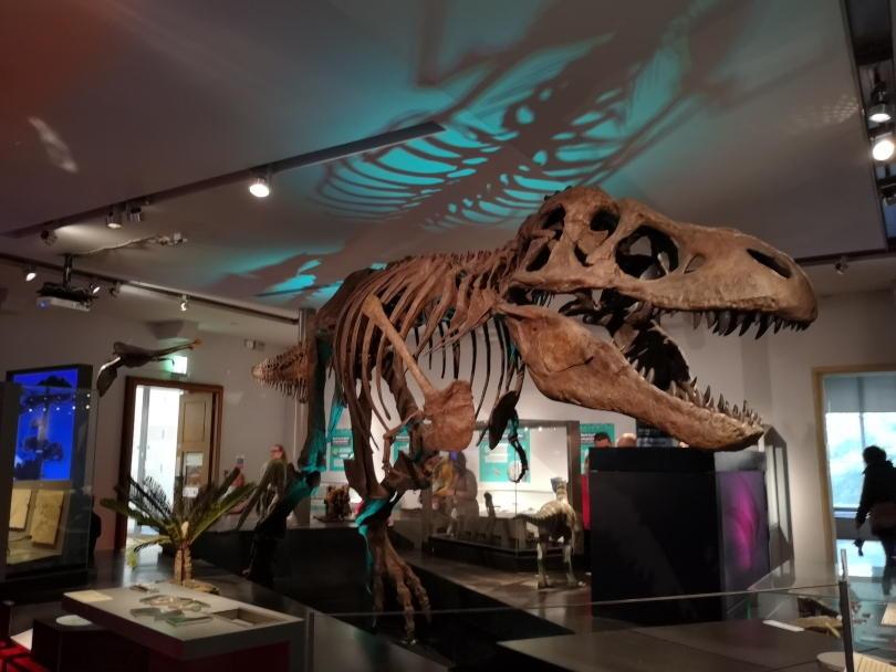 T-Rex at Great North Musueum