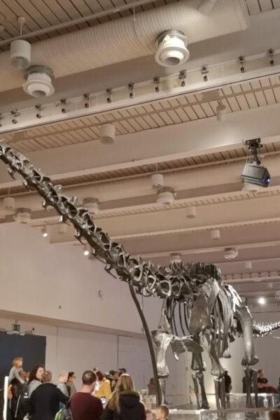 Dippy the diplodocus skeleton in the Great North Musueum