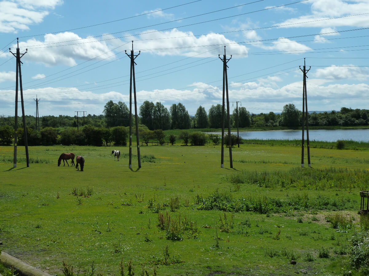 A view of Swallow pond at the Rising Sun Country park. The pond is in the background and horses are grazing in the fields in front of it.